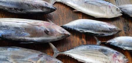 Photo pour Fresh tuna fishes on the table in fish market. Wide photo. - image libre de droit