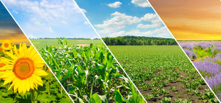 Photo pour Panoramic view of green field and blue sky with light clouds. Collage.Wide photo. - image libre de droit