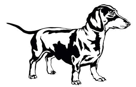 Illustration for Decorative portrait of standing in profile dog dachshund, vector isolated illustration in black color on white background - Royalty Free Image