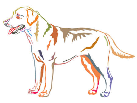 Ilustración de Colorful decorative portrait of standing in profile dog Labrador Retriever, vector isolated illustration on white background - Imagen libre de derechos