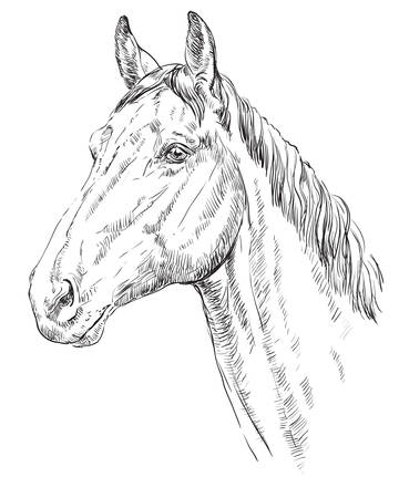 Illustration pour Horse head vector illustration - image libre de droit