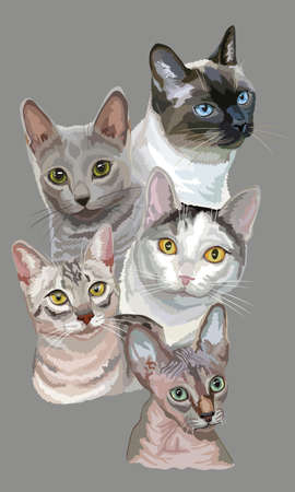 Vertical postcard with portraits of cats breeds (Egyptian Mau, Russian Blue, Sphynx ,Thai cats) isolated on grey background. Vector colorful illustration.