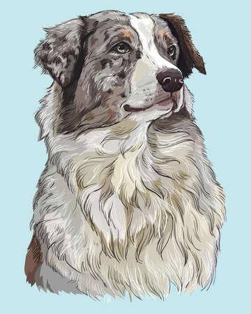 Illustration pour Australian shepherd vector hand drawing illustration in different color on turquoise background - image libre de droit