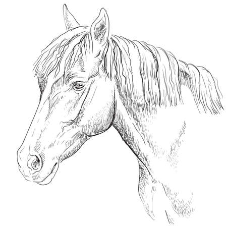 Illustration pour Horse portrait. Horse head  in profile in monochrome color isolated on white background. Vector hand drawing illustration - image libre de droit