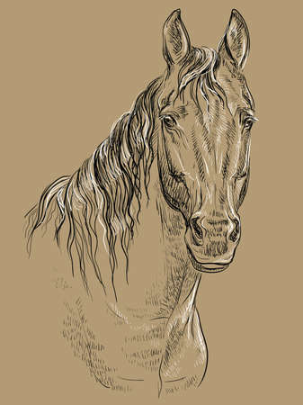 Horse portrait. Horse head with long mane in black and white colors isolated on beige background. Vector hand drawing illustration