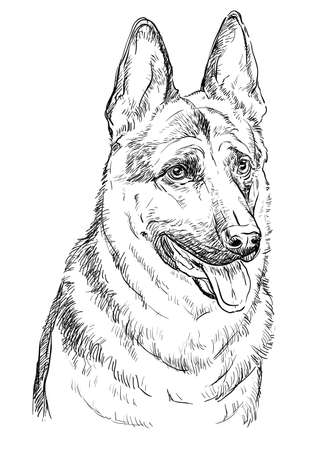 German Shepherd Dog vector hand drawing illustration in black color isolated on white background