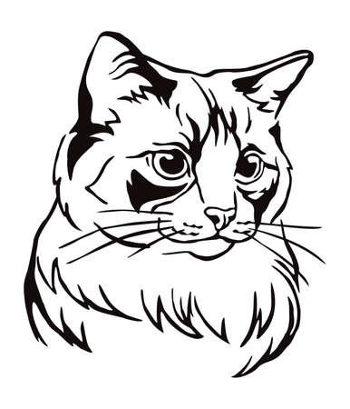 Decorative portrait of Ragdoll cat, contour vector illustration in black color isolated on white background. Image for design, cards and tattoo.