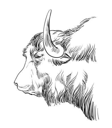 Illustration for Monochrome cow head sketch hand drawn vector illustration isolated on white background. Vintage illustration of Tibetan Yak for label, poster, print and design. - Royalty Free Image