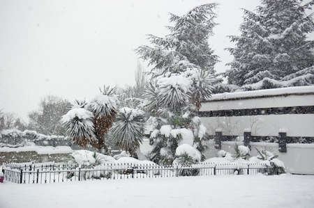 Snowfall in the park. Palm trees under snow in unusually cold weather