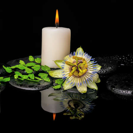 spa still life of passiflora flower, green leaf fern with drop and candle on zen stones in reflection water, closeup