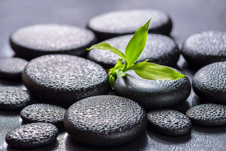 beautiful spa concept of green branch bamboo on zen basalt stones with drops, closeup