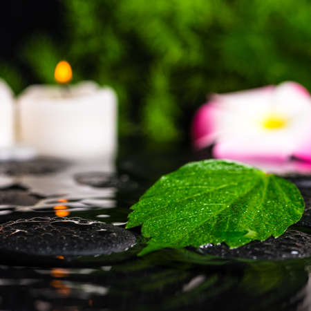 spa concept of green leaf hibiscus plumeria with drops and candles on zen basalt stones in