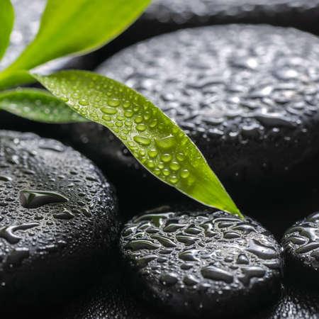 green branch bamboo on zen basalt stones with dew, macro