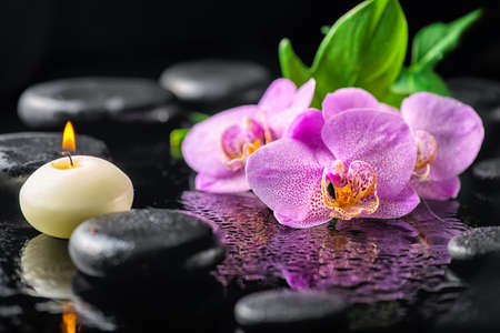 beautiful spa concept of blooming twig lilac orchid flower, green leaf, candle with water drops and zen basalt stones, close up