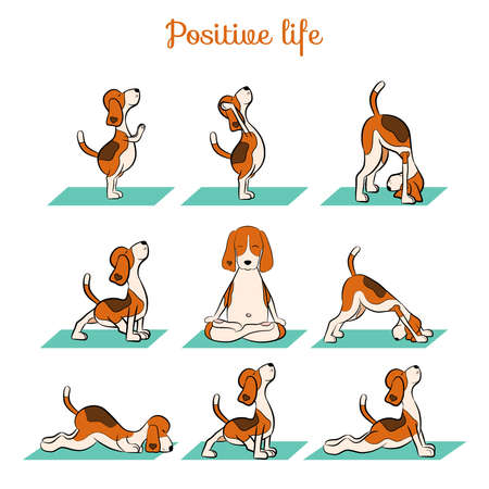 Illustration pour Cartoon funny dog beagle doing yoga position. Surya Namaskara. San Salutation. Vector illustration - image libre de droit