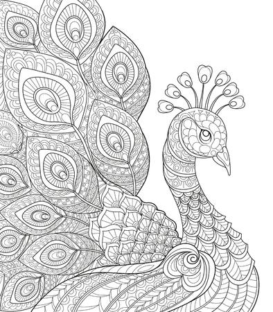 Lovely Peacock Illustration