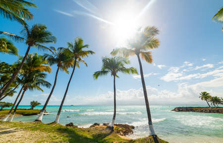 Photo pour Coconut palm trees and turquoise sea under a shining sun in Bas du Fort beach in Guadeloupe, French west indies. Guadeloupe is an archipelago that is part of the Lesser Antilles in the Caribbean sea - image libre de droit