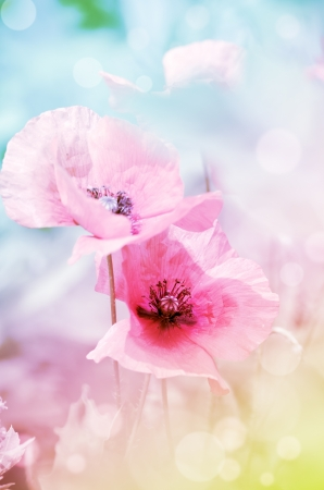 romantic pastel floral background with poppies