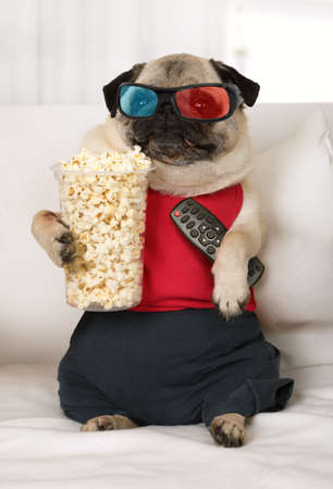 Pug dog in the three-dimensional glasses with a remote control in his paws and popcorn watch TV lounging on the sofa