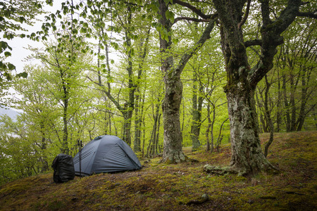 Camping equipment. Tent in the spring forest