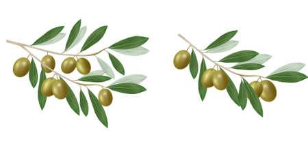 Illustration pour Green olive branch. Photo-realistic. - image libre de droit