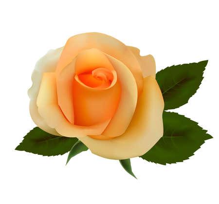 Beautiful tea rose. Vector illustration