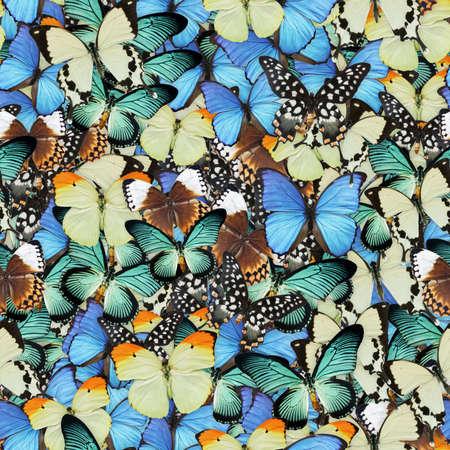 Butterflies Seamless Texture Tile