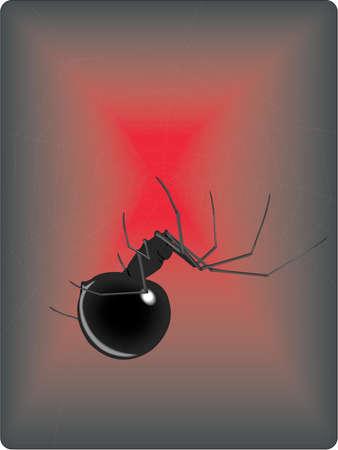 Black Widow Spider Illustration