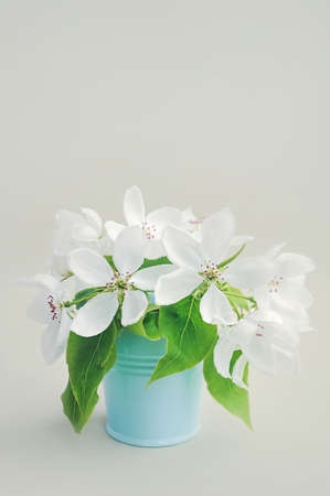 Foto für bouquet of white fresh lush spring pear flowers with large green leaves in a blue metal bucket. simple decor for a cozy place. air purification by plants - Lizenzfreies Bild