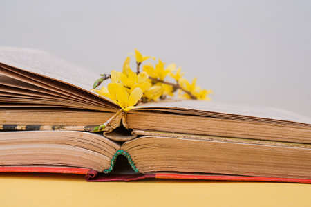 Foto de small yellow blooming forsythia flowers on open old books with battered leaves - Imagen libre de derechos