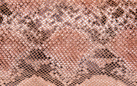 Foto de Snake skin pattern, natural background, top view - Imagen libre de derechos