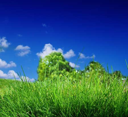 Photo pour green grass and blue sky - image libre de droit