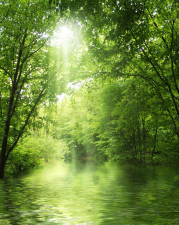 sunbeam in green forest with