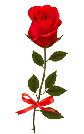 Beautiful red rose with a bow.