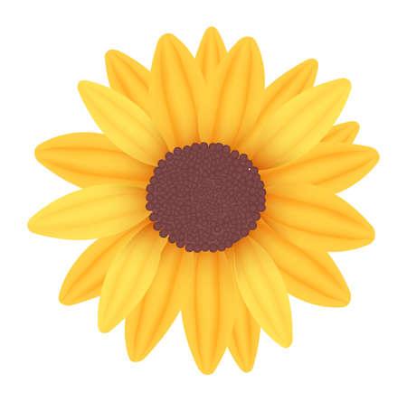 Sunflower. Vector.
