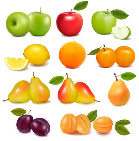 Foto für Big group of different fresh fruit  Vector  - Lizenzfreies Bild