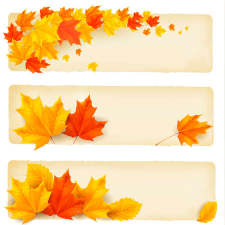 Three autumn banners with colorful leaves  Vector のイラスト素材