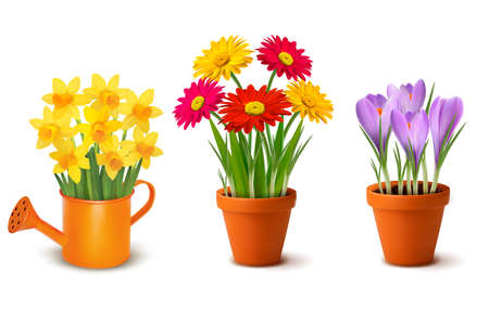 Illustration pour Collection of spring and summer colorful flowers in pots and watering can. Vector - image libre de droit