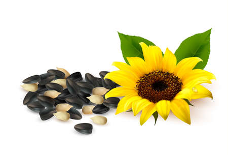 Background with yellow sunflowers and sunflower seeds illustration.