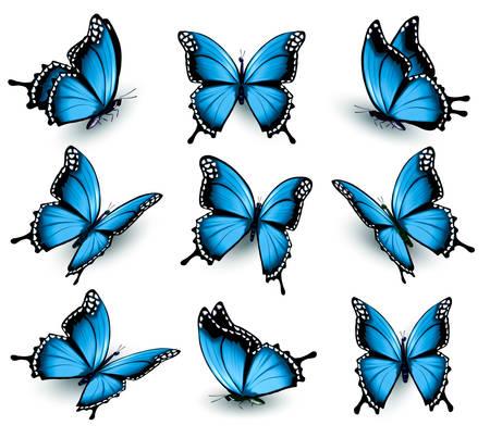 Illustration pour Set of beautiful blue butterflies. - image libre de droit