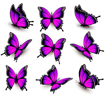 purple butterfly in different positions.