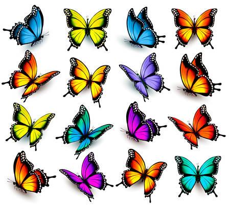 Ilustración de Big collection of colorful butterflies. Vector - Imagen libre de derechos