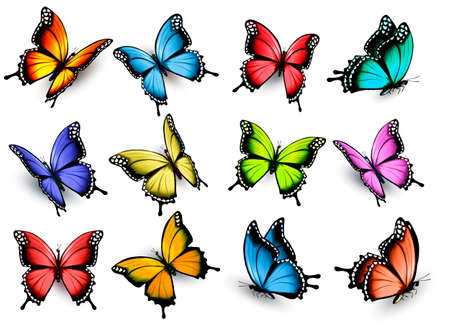 Illustration pour Collection of colorful butterflies, flying in different directions. Vector. - image libre de droit