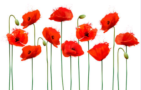 Illustration for Abstract background with red poppies flowers. Vector. - Royalty Free Image
