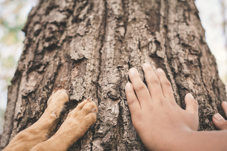 Asian boy and dog touching big tree color of hipster tone selective soft focus, concept nature and human protect environment