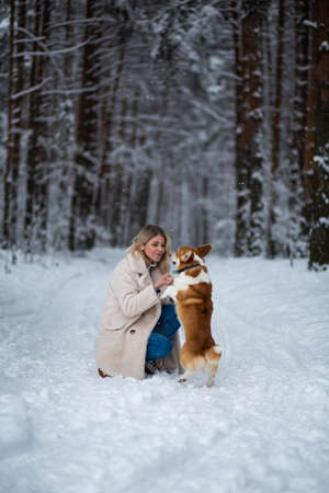 Photo pour Young blonde female is playing with her welsh corgi pembroke in a winter snowy forest. - image libre de droit