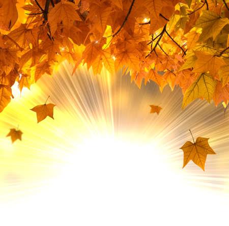 Falling orange leaves background against sun ray