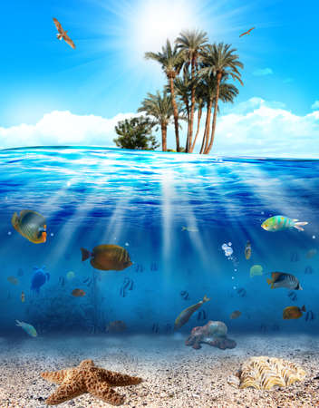Underwater scene with fishes and seashell