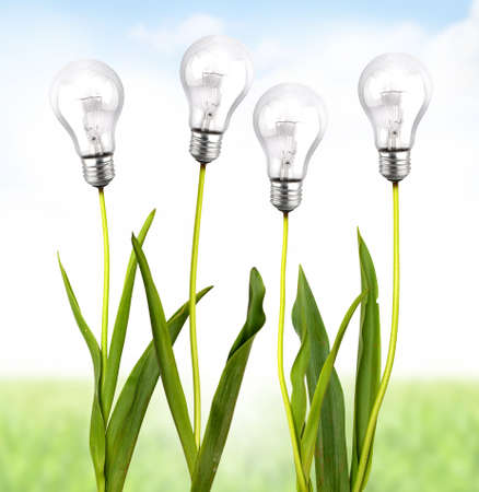 Green plant with bulb light