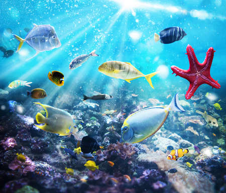 Colourful fish and marine vegetation undersea with sunray